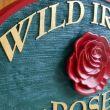 Wild Irish Rose: West Henrietta, NY