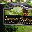 Evergreen Springs: